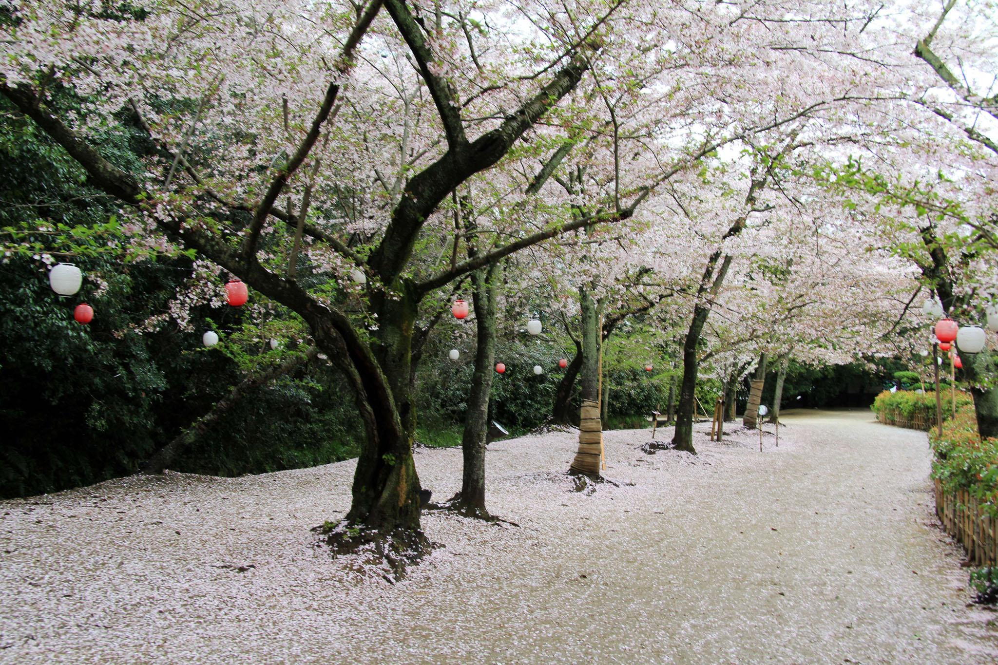 Voyage à moto inaugural au Japon, au printemps 2015. Une exclusivté de votre agence de voyage Air Moto Tours