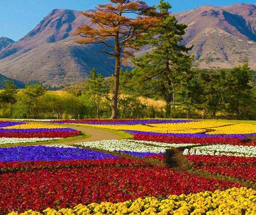 Kuju Flower Park,motorcycle road trip on Kyushu with Air Moto Tours